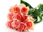 roze-male